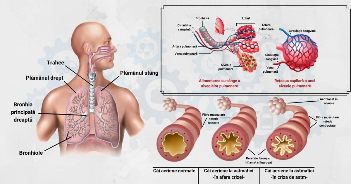 intervenții de pierdere în greutate pentru astmul cronic)